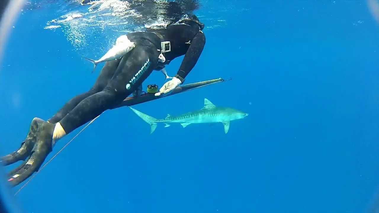 Shark shield freedom 7 manual