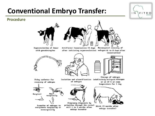 Multiple ovulation embryo transfer technology pdf