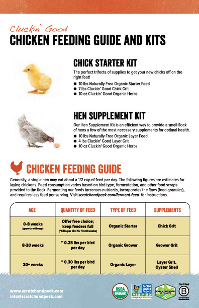 Layer chicken feeding guide philippines