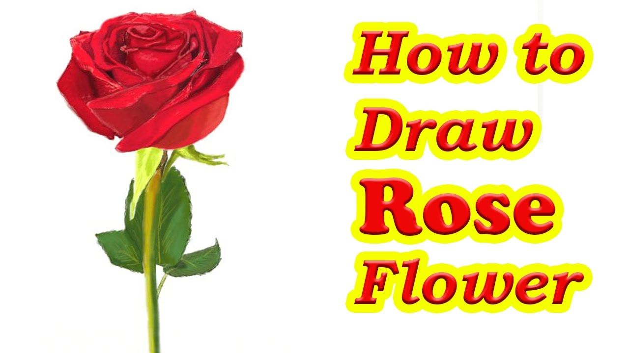 how to draw flowers step by step instructions