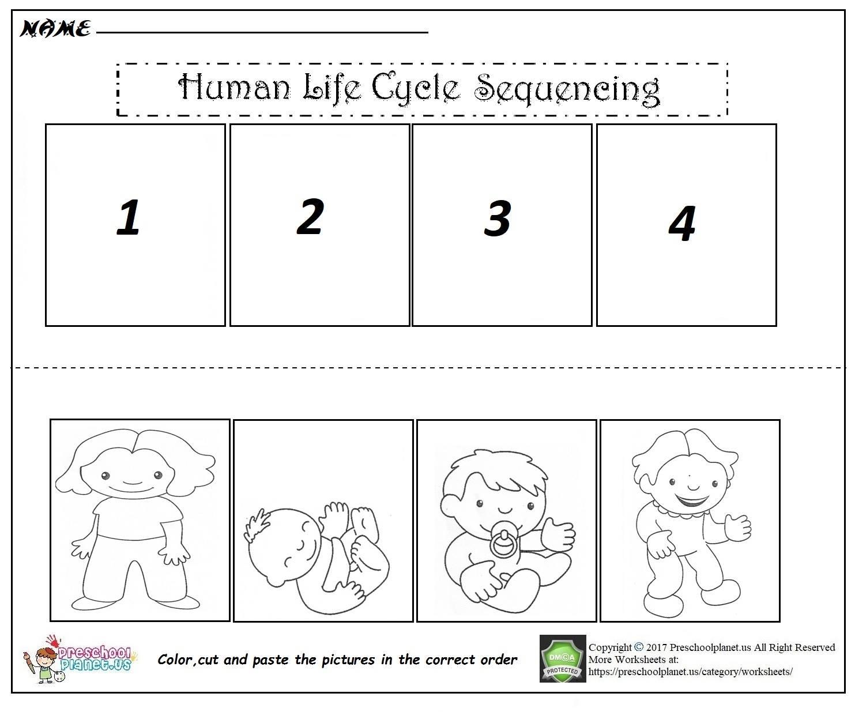 Human life cycle worksheet pdf