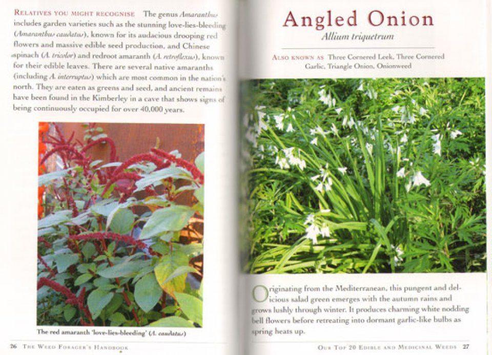 Adam grubb weed foragers handbook
