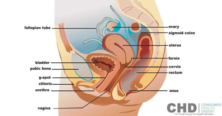 Anatomie et physiologie de la prostate pdf
