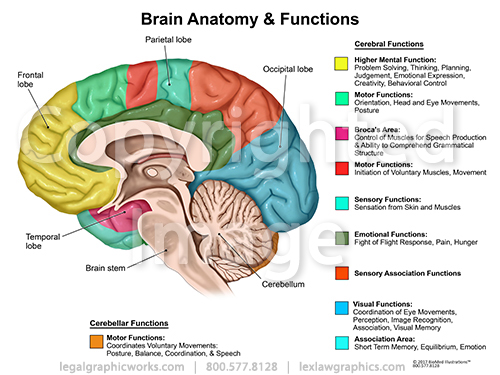 Anatomy of human brain and its functions pdf