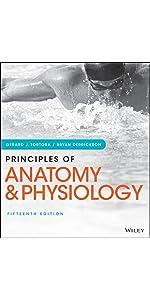 Principles of human anatomy 14th edition pdf