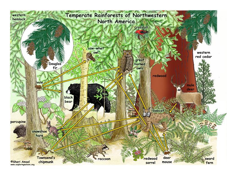 Forest trees of australia pdf