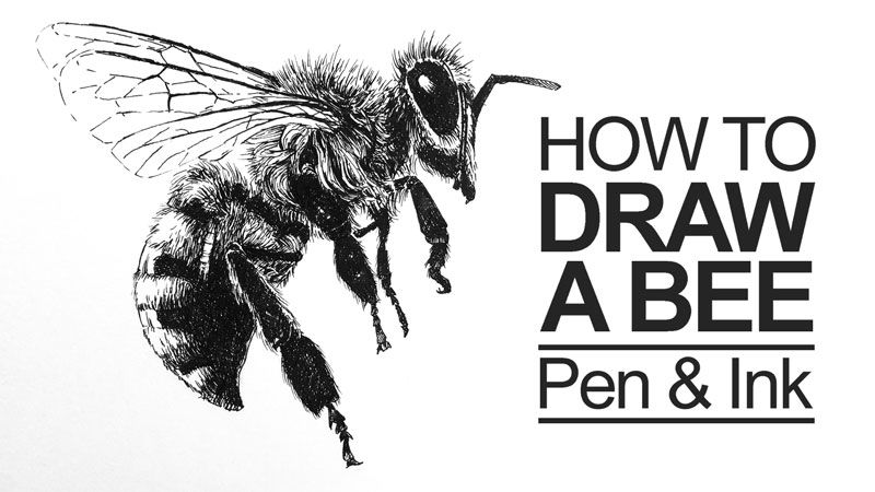 Pen and ink drawing a simple guide