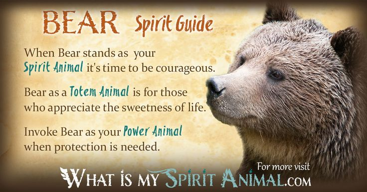 The raven and spirit guide grizzly bear